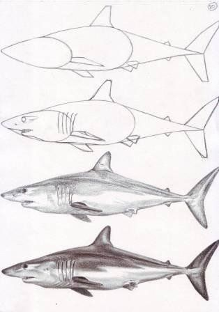 Drawings, Sharks and Step by step on Pinterest