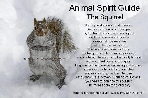 your animal spirit guide