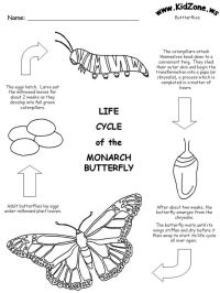 free printable life cycle of the Monarch butterfly ...
