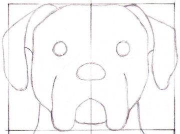 Simple, Step by step and A dog on Pinterest