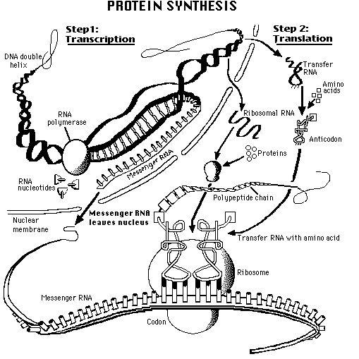 Protein on Pinterest