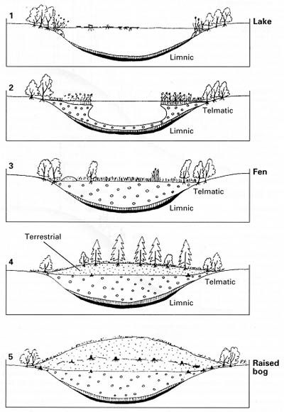 Ecological succession, Lakes and Biomes on Pinterest