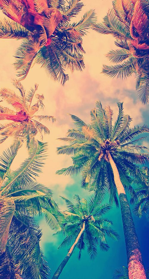Preppy Iphone Wallpaper Wtf Color Tropical Background Fundal Background