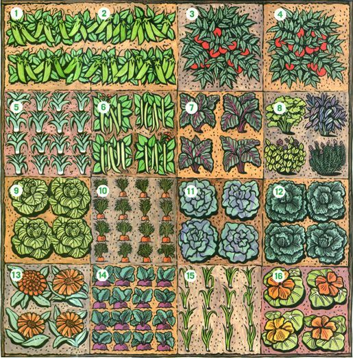 Square Foot Garden Layout Ideas Can't Wait For Spring! Great