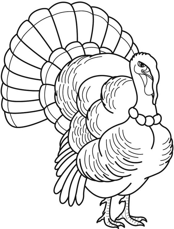 Wild Turkey With The Feathers Overlap Coloring Pages