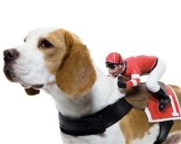 jockey dog costume diy LOL I think this should be Jackpot ...