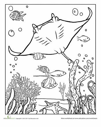 Colors, Coloring pages and Manta ray on Pinterest