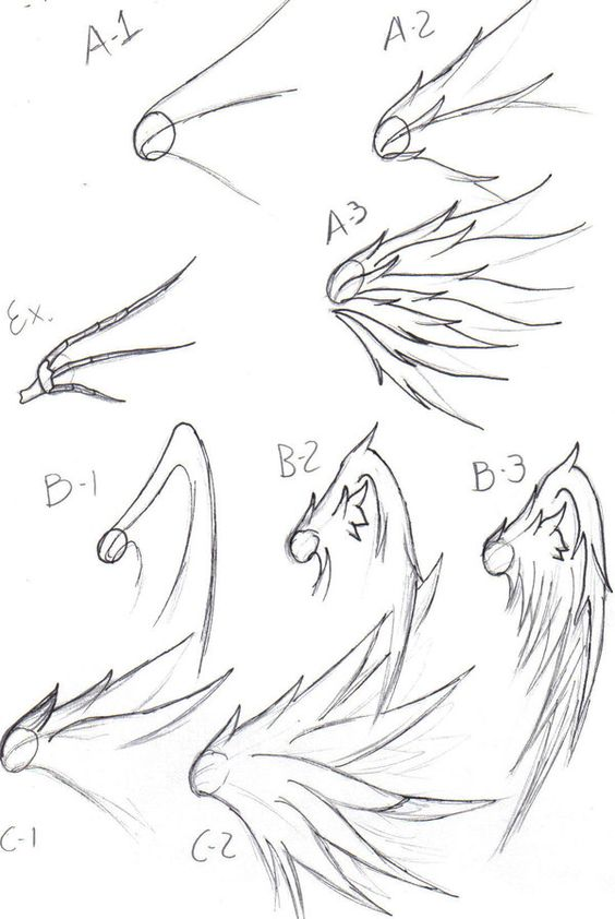 Wings drawing, Wings and Drawing tips on Pinterest