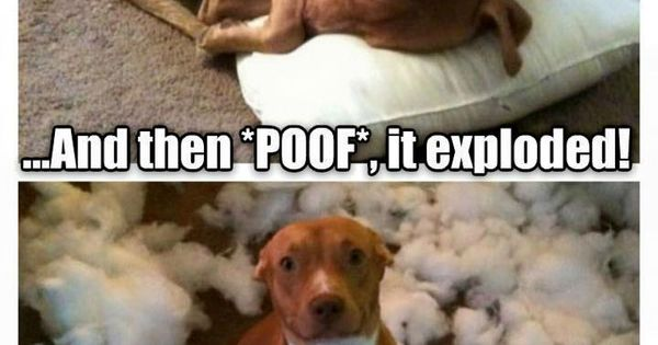 POOF the pillow just exploded  Hehehe So Funny  Pinterest