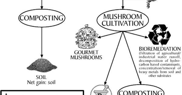 Composting comparison diagram usefulness of mushrooms