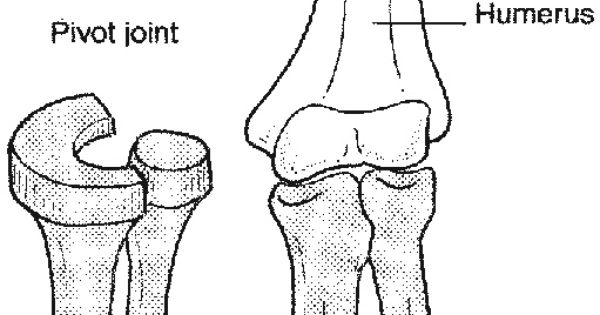 Pivot joint : one of the synovial joint. Uniaxial . Like