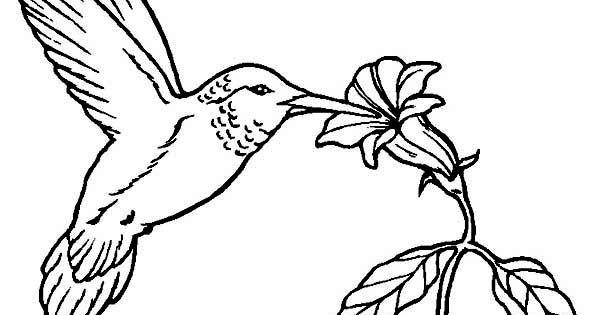 Hummingbirds, : flowers-provide-nectar-for-hummingbird-to