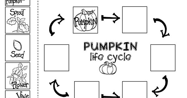 Pumpkin Sequencing with the book