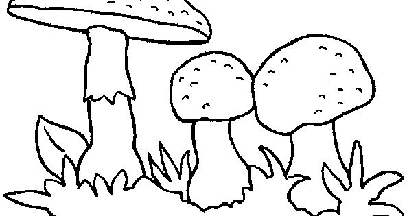 images of coloring page mushrooms pages 21 wallpaper