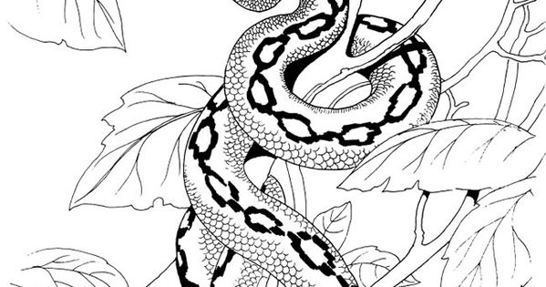 Welcome to Dover Publications Snakes of the World Coloring