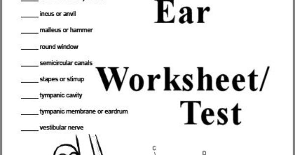 3 page Human Ear Worksheet or Test (Answer Key can also be