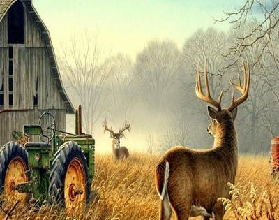 Fall Turkey Wallpaper Two Bucks Barn Amp John Deere Tractor Country Famer Side