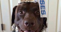 Hershey's Kiss Halloween dog Costume | Dog Halloween ...