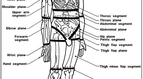 Sketch of a skeleton labeling the structural segments and