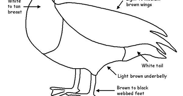 Canada Goose Migration Worksheets