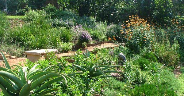 Indigenous South African Garden Google Search Garden Ideas