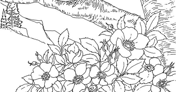 Free Printable Coloring Page...Iowa State Bird and Flower