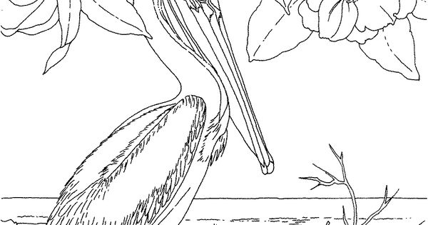 Free Printable Coloring Page...Louisiana State Bird and