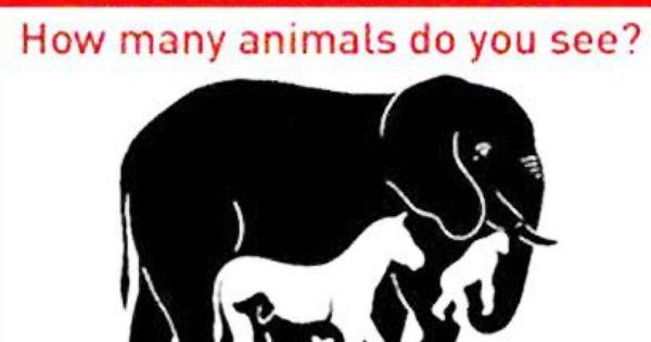 What Can Typhus Do To You How many animals do you see