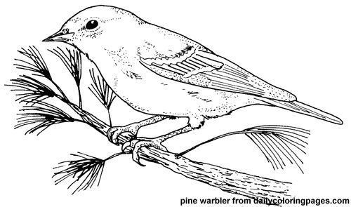 http://dailycoloringpages.com/images/texas-pine-warbler