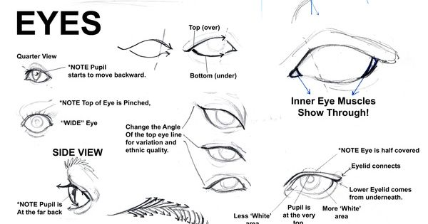Notes on drawing the face, eyes, ears, mouth and nose http