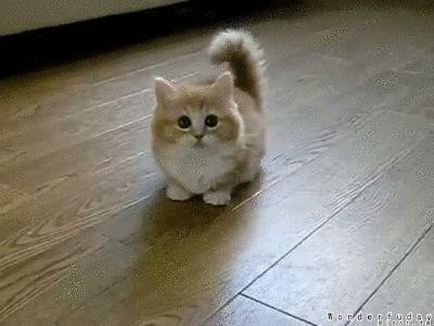Cute Free Wallpapers For Cell Phones Fluffy Dwarf Kitten D Kittens Pinterest Cats