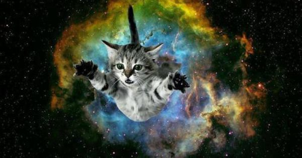 Cute And Funny Cat Wallpaper Cat Bursting From Galaxy Background Galaxy Pinterest