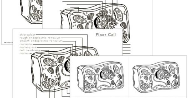 Elementary Plant Cell Nomenclature: includes 14 parts of a