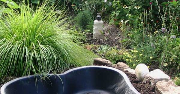 Best Tips for Starting a Small Garden Pond