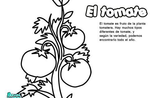 Dibujos colorear para niños, el tomate. Educativos frutas