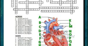 Heart Crossword with Diagram {Editable} | Student learning