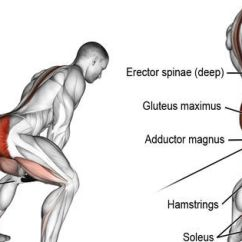 Gym Chest Chair Baby Walker Cable Pull Through. A Compound Exercise. Target Muscle: Gluteus Maximus. Synergistic Muscles ...