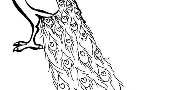 A lovely african congo peacock coloring page kids play