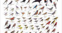 Identification Charts  Doube Duty Wall Art | Bird ...