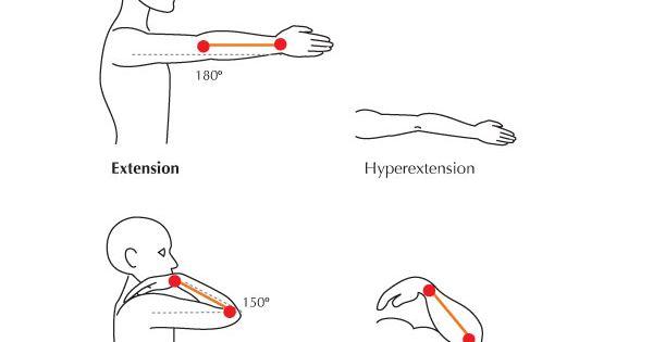 Human Anatomy Fundamentals: Flexibility and Joint