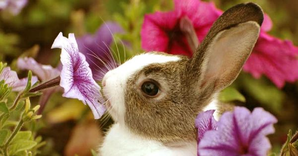 Cute White Baby Rabbits Wallpapers Cute Baby Bunny Sniffing A Flower Easter Pinterest