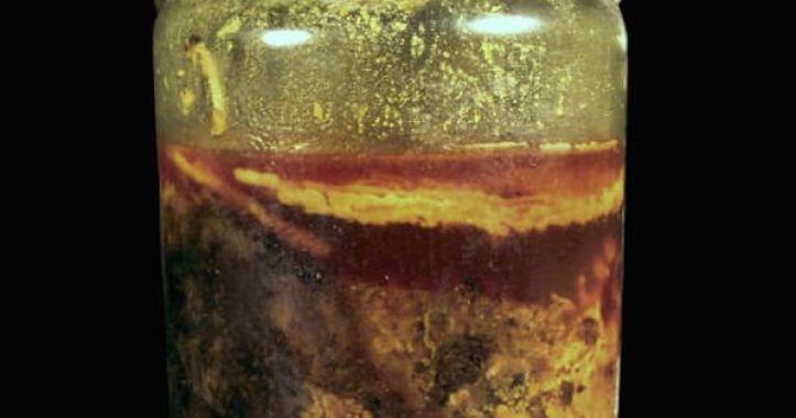 Resultado de imagen para speyer bottle