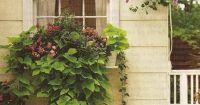 Love this window box, especially the sweet potato vine (1 ...