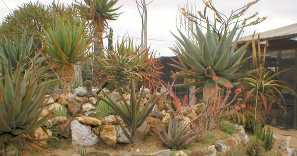 Pretty In A Different Way Dessert Succulent Rock Garden