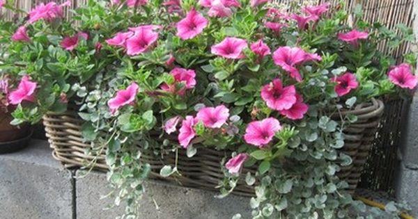 Blumenkasten auf die Fensterbnke  GartenGarden