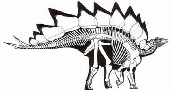 Dinosaur Depot Museum, Garden Park dinosaurs, Garden Park