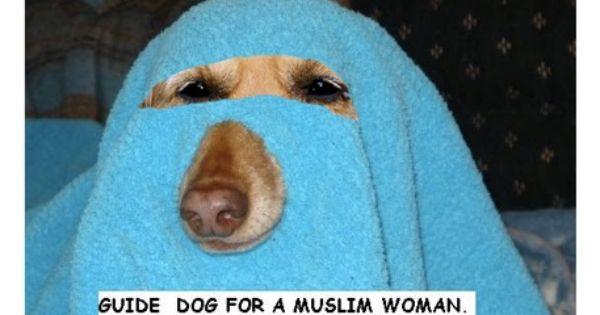 Muslim Guide Dog  Barka  funny animals  Pinterest