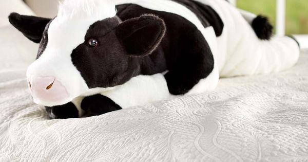 Cuddly Cow Body Pillow for those who love cows  For the