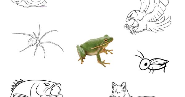 Worksheet for a frog's prey and predators. Free for