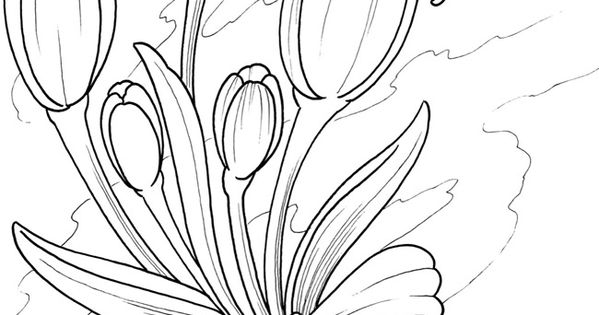 Welcome to Dover Publications / Creative Haven Floral
